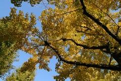 Gelb-Blätter Stockfotos