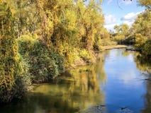 Gelb-Blätter, die unten von einer Baum-und Fluss-Ansicht baumeln stockfotografie