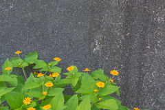 Gelb blüht grünen Busch Stockfotos