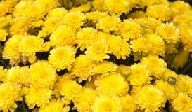Gelb blüht Hintergrund Lizenzfreie Stockfotografie
