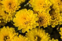 Gelb blüht Hintergrund Lizenzfreie Stockfotos