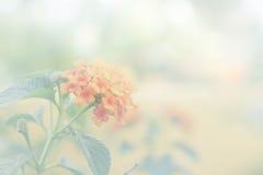 Gelb blüht Weinlese mit weißem Filter Lizenzfreie Stockfotografie