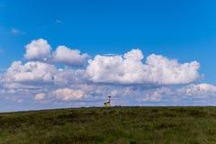 Gelb-blaue ukrainische Flagge, die durch den Wind auf die Oberseite eines grünen Berges unter den Wolken verbreitet Lizenzfreie Stockfotos