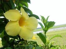 gelb stockfoto