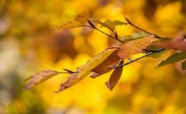 Gelb-braune Blätter auf einem gelben Hintergrund Stockfotografie
