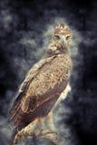 Gelb-brauner Adler im Rauche Stockbild