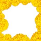 Gelb der Ringelblume blüht Rahmenhintergrund auf weißem Hintergrund Stockfotografie
