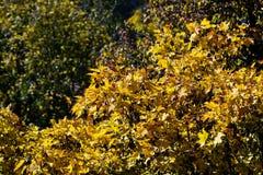Gelb färbende Baumkronen stockbild