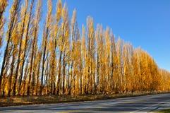 Gelb farbige Herbstespenzeile Stockbild