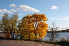 Gelb gefärbte Bäume auf der Bank des Flusses vor dem hintergrund eines hellen blauen Himmels mit weißen Wolken Stockbild