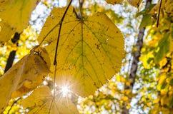 Gelb gefärbte Blattnahaufnahme Lizenzfreie Stockfotos