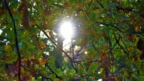 Gelb gefärbter Wald des Herbstes Landschaft mit Sonnenstrahlen Stockbilder
