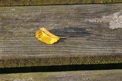 Gelb gefärbtes Blatt auf Holzbank Lizenzfreie Stockfotos