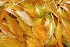 Gelb gefärbtes Gras im Park Stockfotos