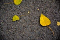 Gelb gefallene Blätter Stockfotografie