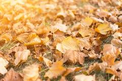 Gelb gefallene Blätter auf Gras lizenzfreie stockfotos