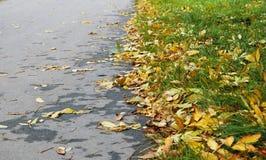 Gelb gefallene Blätter liegen auf dem grünen Gras Stockfotos