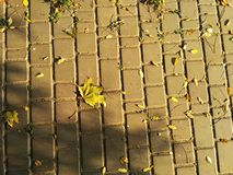 Gelb gefallenes Ahornblatt stockfoto