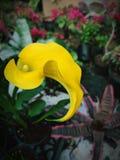 gelb stockbilder