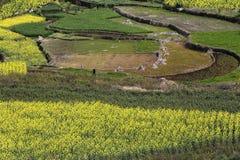 gelb, grün und Erde, die Zusammensetzung des Bildes Stockfotos