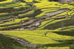 gelb, grün und Erde, die Zusammensetzung des Bildes Lizenzfreie Stockbilder