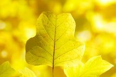 Gelb lässt Hintergrund Stockfotos