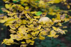 Gelb lässt Natur schönen Herbst lizenzfreies stockbild