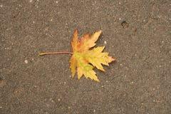 Gelb-rotes Herbstblatt Lizenzfreies Stockfoto