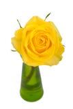 Gelb stieg auf Weiß Stockbild