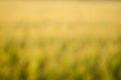 Gelb tonte abstrakten Hintergrund Lizenzfreie Stockfotos
