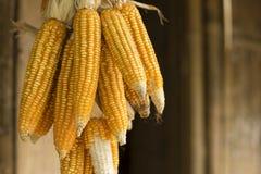 Gelb trocknete den Mais, der oben für das Trocknen gehangen wurde Stockfotografie