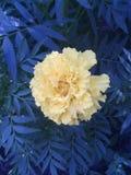 Gelb und Blau Lizenzfreies Stockbild