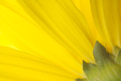 Gelb und Grün Lizenzfreie Stockfotografie