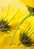 Gelb und Grün Stockfotografie