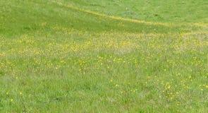 Gelb und Grün lizenzfreies stockfoto