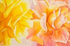 Gelb und Pfirsich-Rosen Stockfoto