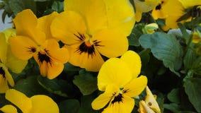 Gelb und Schwarzes Lizenzfreie Stockbilder