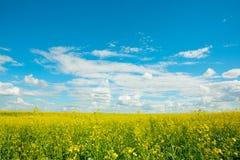 Gelb vergewaltigt Blumen auf dem Feld und dem blauen Himmel mit Wolken stockfotografie