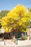 Gelb verlässt auf Baum auf Canyon Road, Santa Fe, New Mexiko Stockfotos