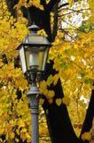 Gelb verlässt auf Bäumen - Herbstlandschaft in Florenz-Park in Toskana Stockfotos