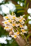 Gelb - weiße Orchideen stockbild