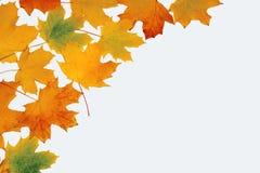 Gelbblätter Stockbild