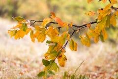 Gelbblätter auf dem Baum im Herbst Stockbilder