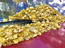 Gelbblätter auf dem roten Auto lizenzfreie stockbilder