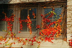 Gelbblätter auf den Fenstern Stockfotografie