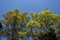 Gelbblätter auf einem blauen Hintergrund. Lizenzfreies Stockfoto