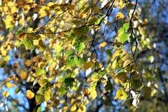Gelbblätter auf Niederlassungen im Herbst Lizenzfreie Stockfotos