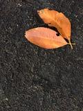Gelbblätter auf schwarzem Stein lizenzfreies stockbild