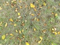 Gelbblätter auf Wiese im Herbst Stockfotografie