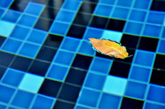 Gelbblätter, die auf das Wasser schwimmen. Stockbilder